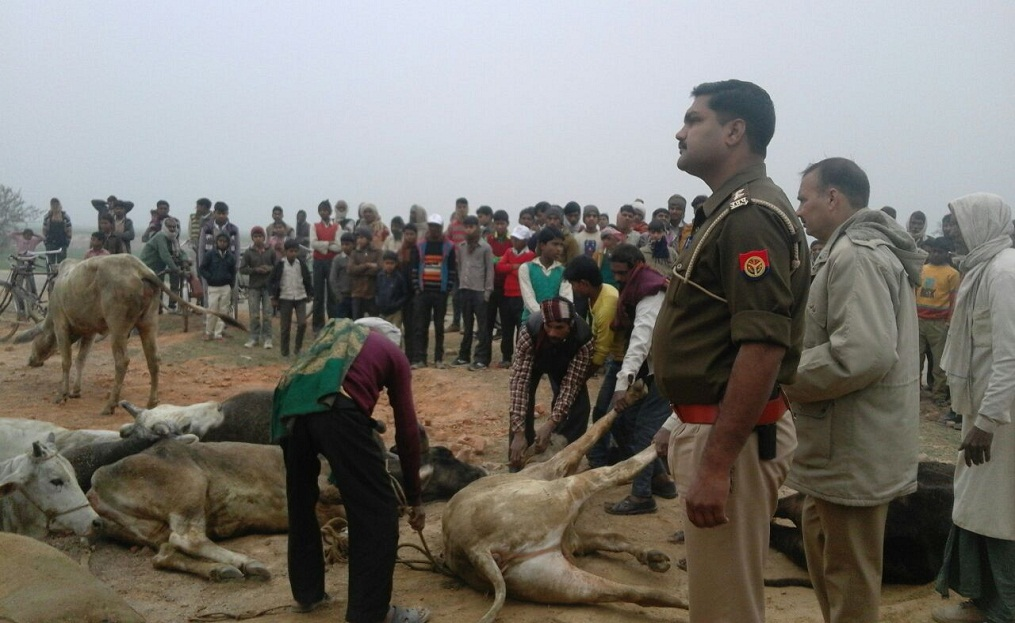 Animal smuggling shahjahanpur