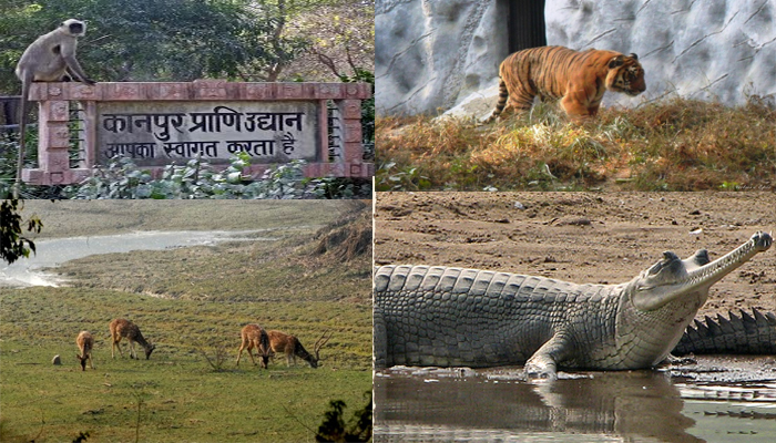 kanpur zoo zoological park