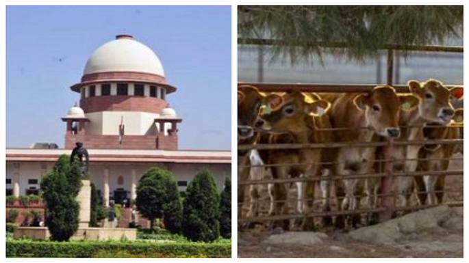 central government against cow violence