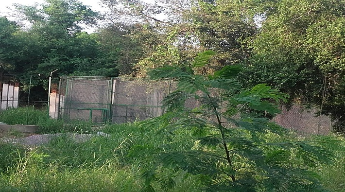 lucknow zoo 22 year old Lioness shubhangi found dead