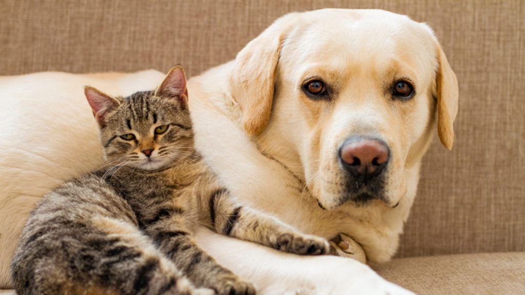 Food allergies may affect your pet dogs, cats too