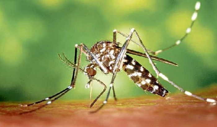 Jaunpur: Outbreaks of mosquitoes spread in villages
