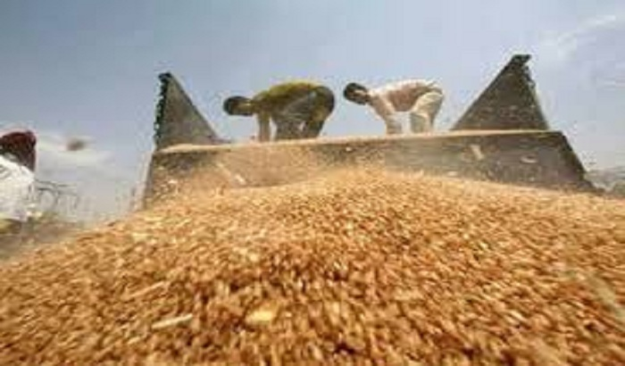 Lucknow- 43 centers for wheat procurement in UP capital