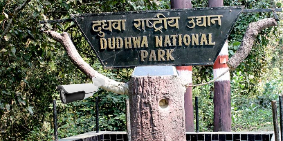 Wildlife Monitoring From Infrared CCTV Cameras in Dudhwa National Park